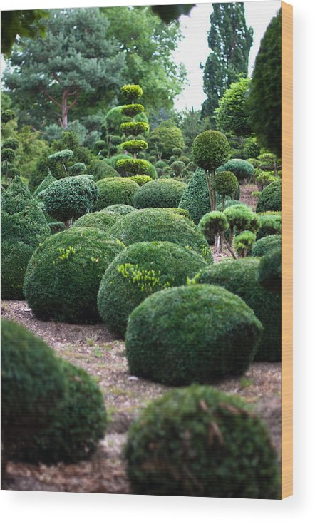 Topiary Wood Print featuring the photograph Garden Landscape - Topiary by Frank Gaertner