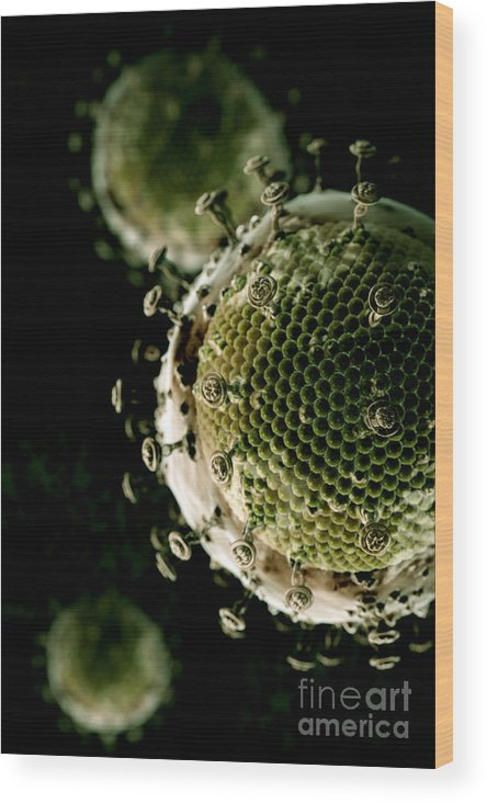 Vertical Wood Print featuring the photograph Hiv by Science Picture Co
