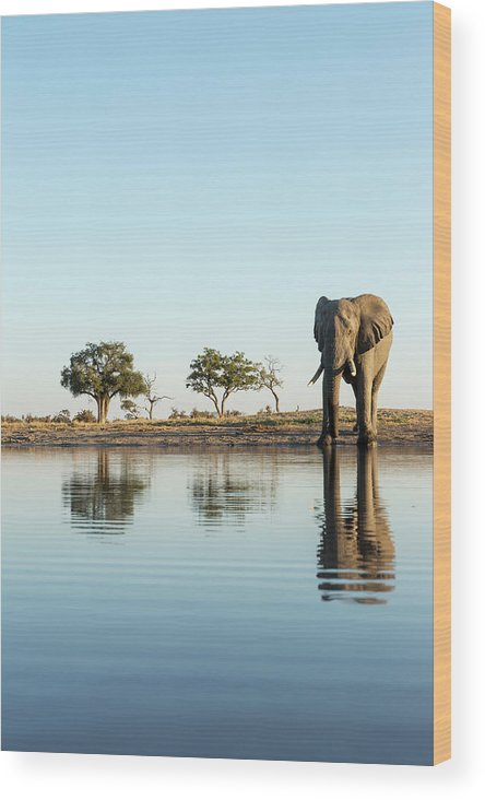 Africa Wood Print featuring the photograph Africa, Botswana, Chobe National Park by Paul Souders
