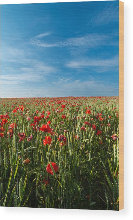 Europe Wood Print featuring the photograph Poppy Field by Ollie Taylor