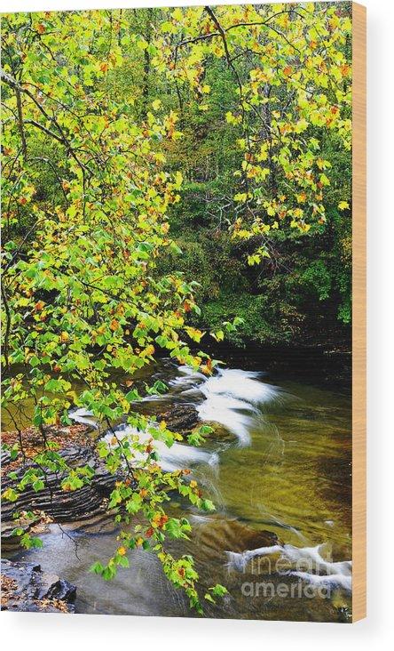 Cherry Falls Wood Print featuring the photograph Cherry Falls Elk River by Thomas R Fletcher