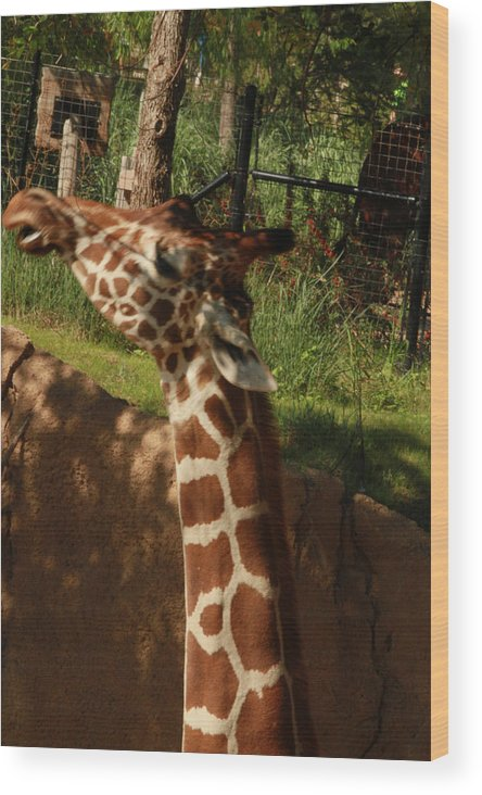 Nature Wood Print featuring the photograph Giraff by Tinjoe Mbugus