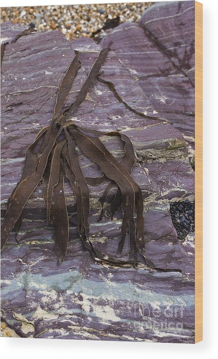Slate Wood Print featuring the photograph Devonian Slates by Dr Keith Wheeler