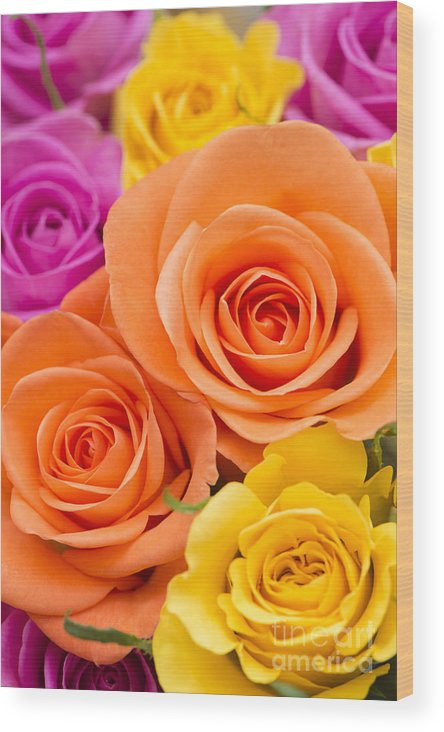 Arranged Wood Print featuring the photograph A Riot Of Roses by Anne Gilbert