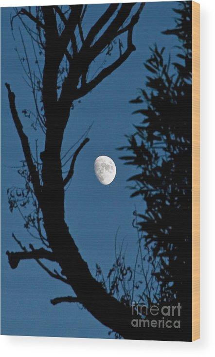 Moon Wood Print featuring the photograph Almost Full by Steve Rowland