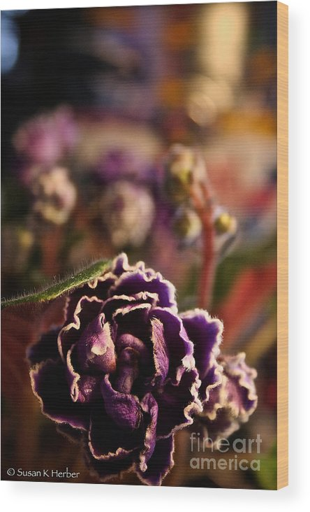 Flower Wood Print featuring the photograph Amethyst Opening by Susan Herber