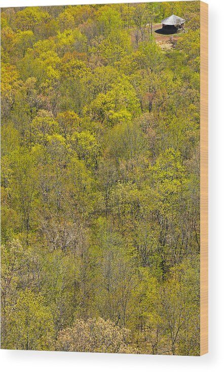 Trees Wood Print featuring the photograph Among The Trees by Karol Livote