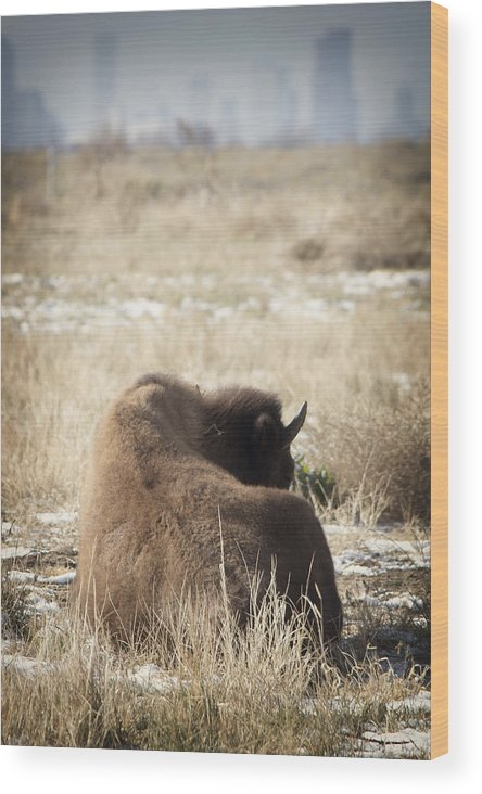 Buffalo Wood Print featuring the photograph At Home Near The City by Andresen Photography
