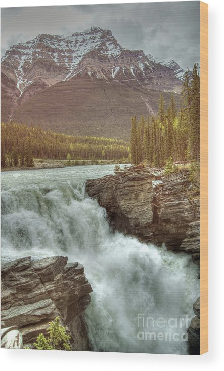 Athabasca Falls Wood Print featuring the photograph Athabasca Falls by David Birchall