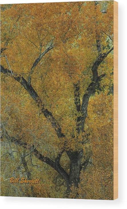 Landscape Wood Print featuring the photograph Autumn Contrast by Bill Sherrell