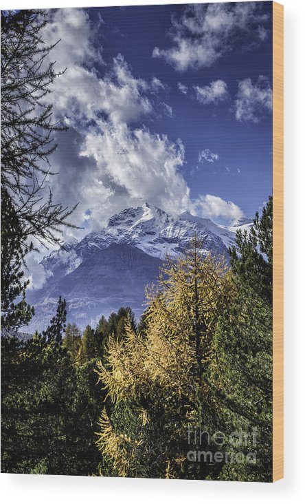 Pontresina Wood Print featuring the photograph Autumn In The Alps 2 by Timothy Hacker