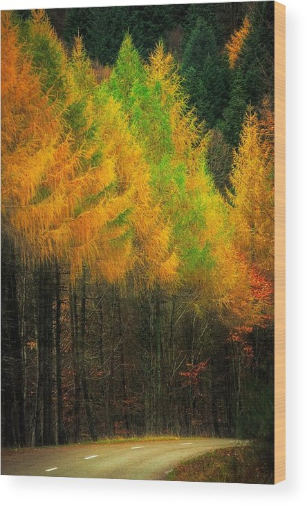 Road Wood Print featuring the photograph Autumnal Road by Maciej Markiewicz