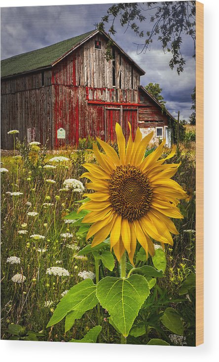 Barn Wood Print featuring the photograph Barn Meadow Flowers by Debra and Dave Vanderlaan