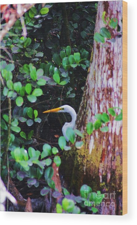 Egret Wood Print featuring the photograph Behind The Tree by Chuck Hicks