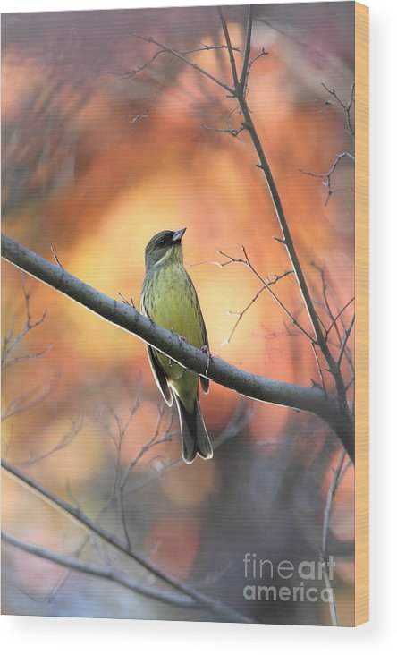 Wood Print featuring the photograph Black-faced Bunting by Akihiro Asami