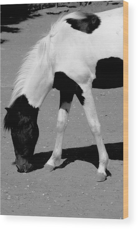 Sotiris Filippou Wood Print featuring the photograph Black N White Horse by Sotiris Filippou