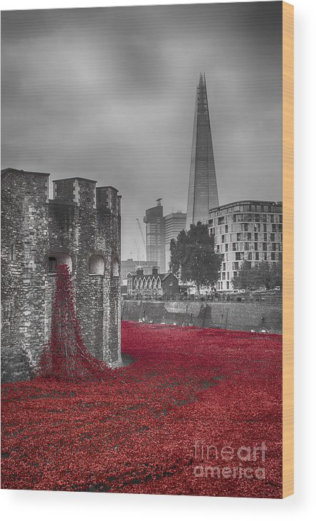Poppies Wood Print featuring the photograph Blood Swept Lands 3 by Chris Thaxter