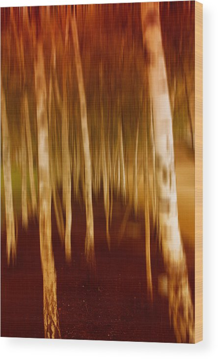 Trees Wood Print featuring the photograph Blurred Trees by Innershadows Photography