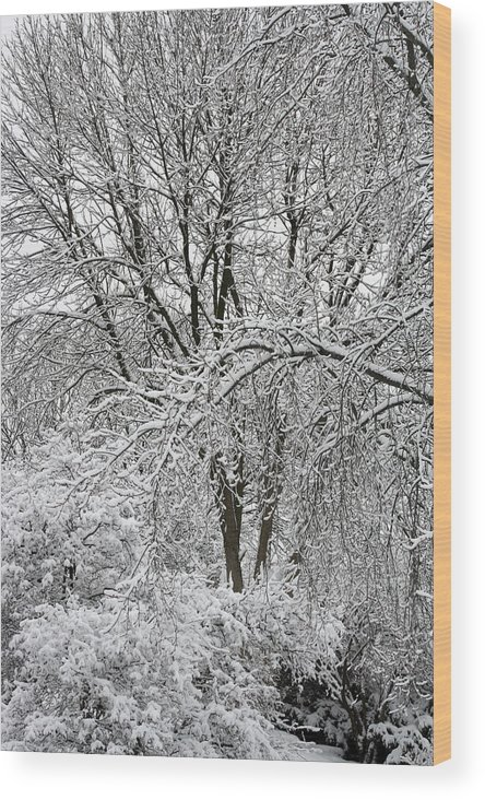 Snow Wood Print featuring the photograph Bowing To Winter by Earl ContehMorgan