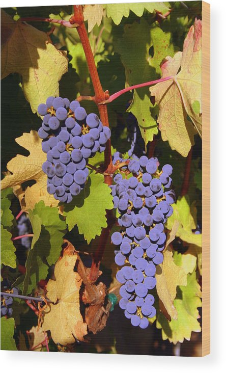 Grapes Wood Print featuring the photograph Cabernet by Kevin Eszlinger