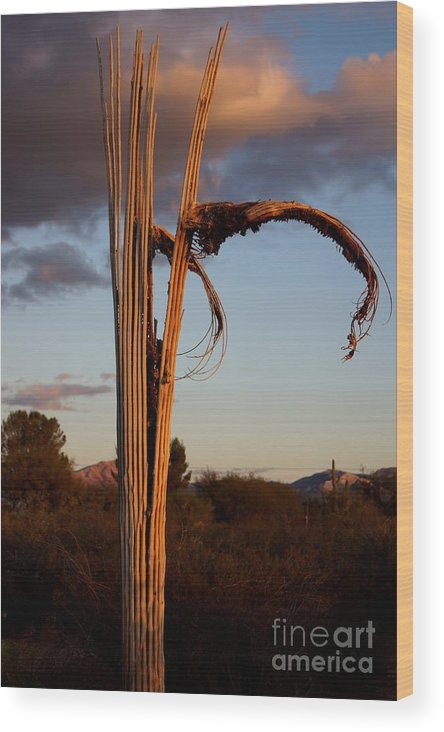 America Wood Print featuring the photograph Cactus Ribs by Kerri Mortenson