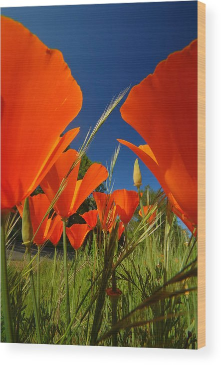 Poppie Wood Print featuring the photograph California Poppies by Mark Rasmussen