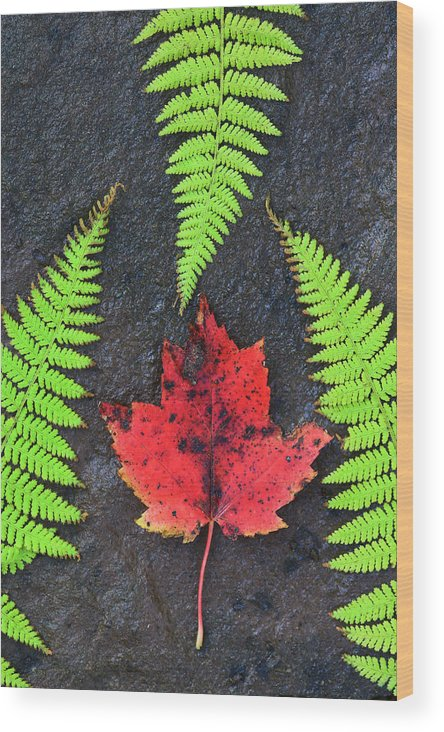 Autumn Wood Print featuring the photograph Canada, Nova Scotia, Cape Breton, Three by Patrick J. Wall