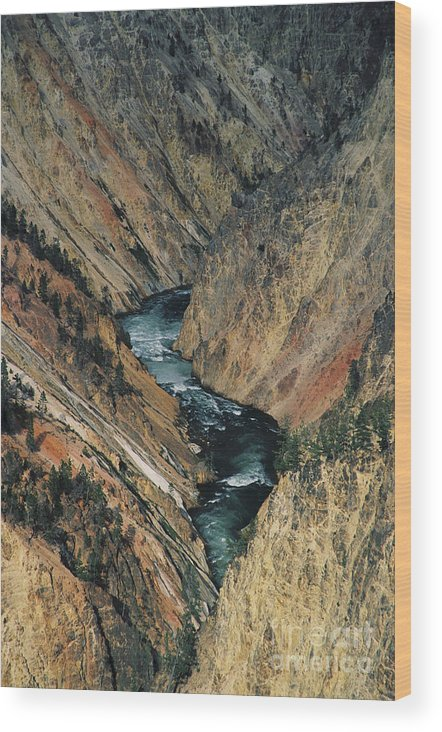 Yellowstone Wood Print featuring the photograph Canyon Jewel by Kathy McClure