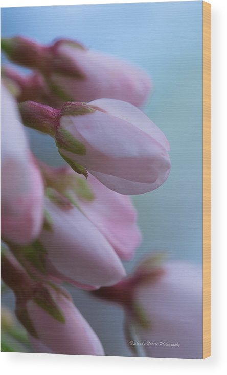Sheen Wood Print featuring the photograph Cherry Blossom by Sheen Watkins