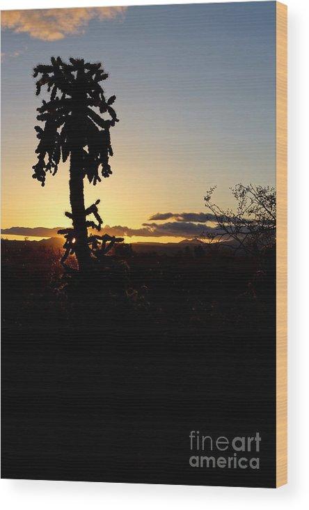 America Wood Print featuring the photograph Cholla Cactus Sunset by Kerri Mortenson