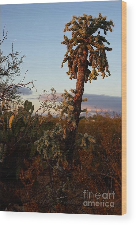 America Wood Print featuring the photograph Cholla Cactus View by Kerri Mortenson