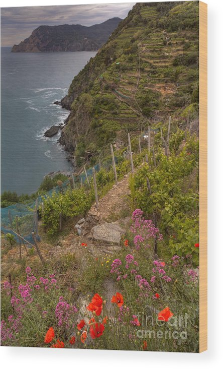 Michele Wood Print featuring the photograph Cinque Terre Terraces In Spring by Michele Steffey