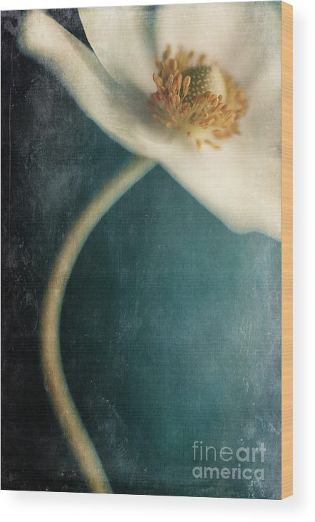 Anemone Wood Print featuring the photograph Not Her Whole Self by Priska Wettstein