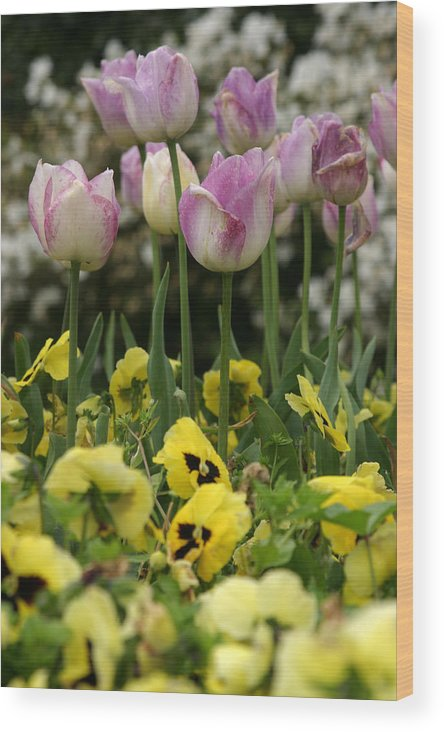 Flowers Wood Print featuring the photograph Descanso Gardens 2 by Kathy Hutchins