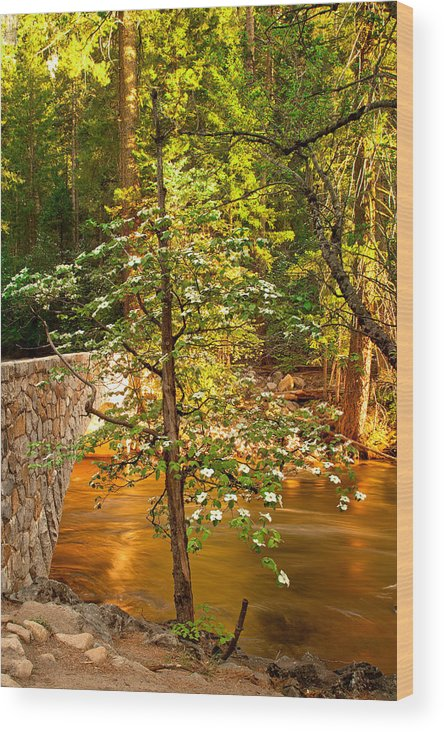 Yosemite Photographs Wood Print featuring the photograph Dogwood Bridge by David Forster