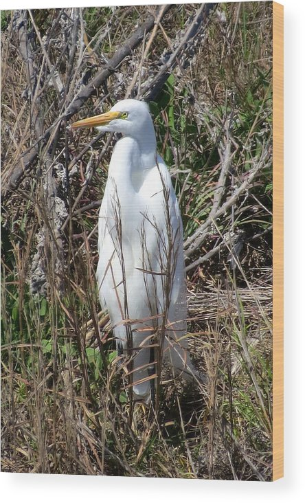 Brown Pelican Wood Print featuring the photograph Egret1 by Michael Anthony