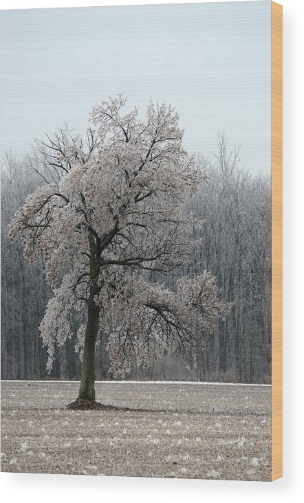 Ice Storm Wood Print featuring the photograph Encased In Ice by Dave Johnson