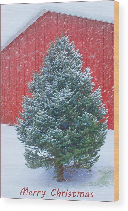 Christmas Wood Print featuring the photograph Evergreen In Winter 2 by Nikolyn McDonald