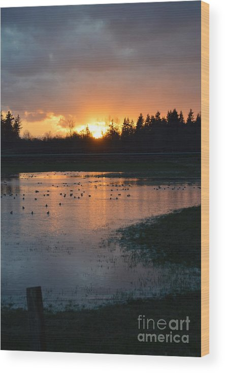 Sunset Wood Print featuring the photograph Field Of Ducks by Jan Noblitt