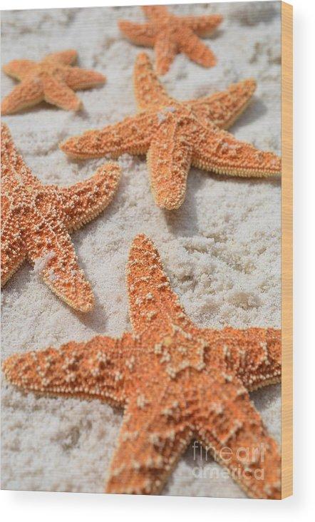 Five Starfish Wood Print featuring the photograph Five Starfish by Carol McGunagle