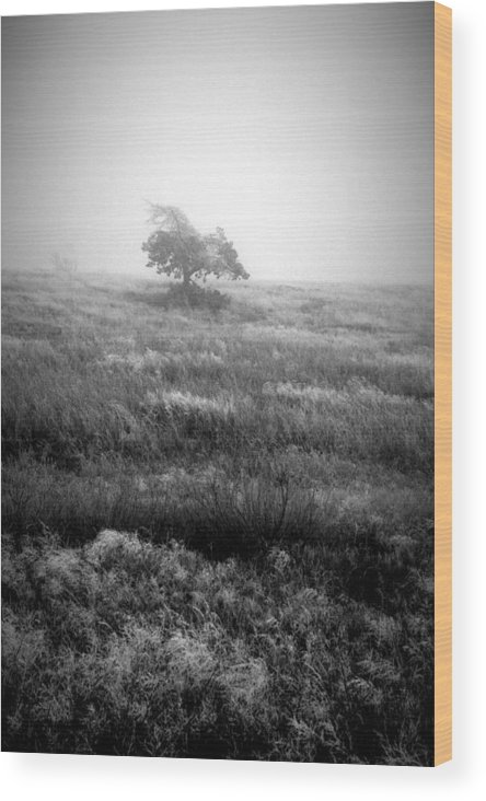 Trees Wood Print featuring the photograph Foggy Winter II by Rebecca Basden