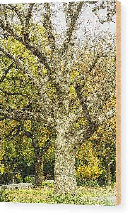 Japanese Gardens Bridge Prints Photographs Wood Print featuring the photograph Fort Worth Japanese Gardens-041 by David Allen Pierson