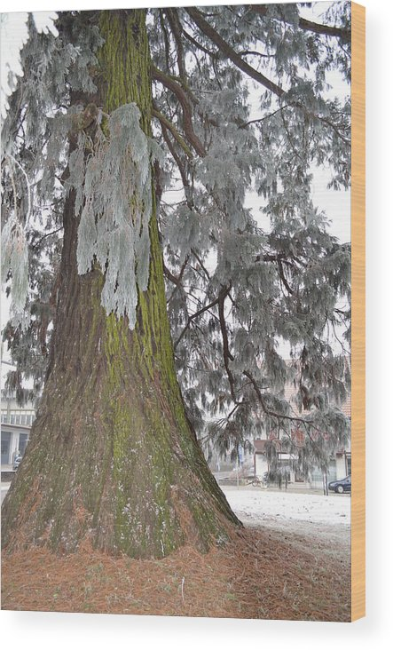 Nature Wood Print featuring the photograph Frost On The Leaves by Felicia Tica