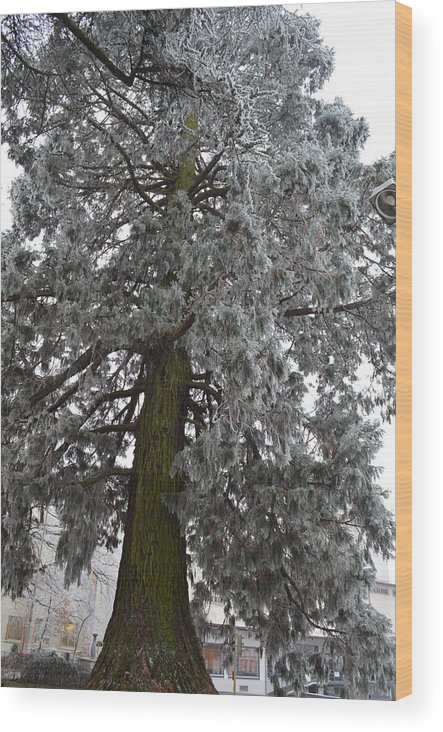 Nature Wood Print featuring the photograph Frozen Tree 2 by Felicia Tica