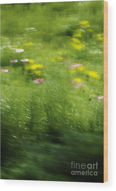 Abstract; Blur; Blurry; Blurred; Garden; Green; Yellow; Pink; Flowers; Grasses; Nature; Lovely; Beautiful; Summer; Serene; Rural; Flower Garden; Floral; Botanic Wood Print featuring the photograph Garden Impressions by Margie Hurwich