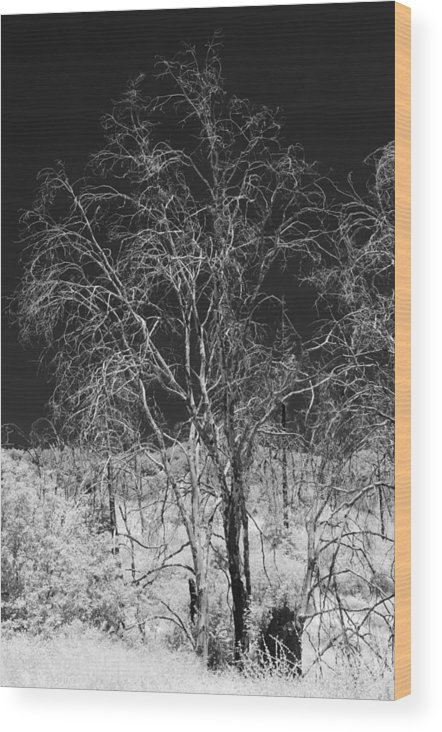 California Wood Print featuring the photograph Ghost Trees by Philip Chiu