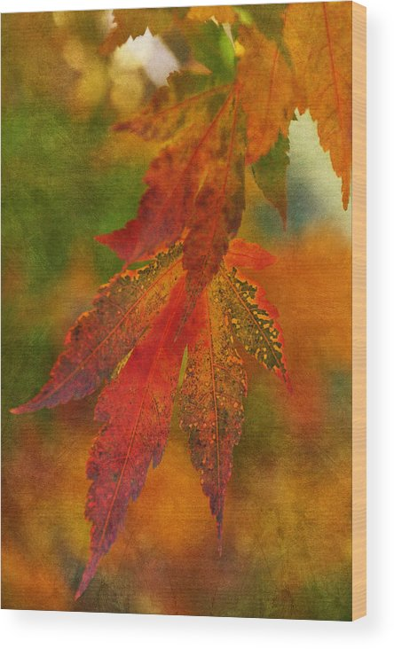 Autumn Wood Print featuring the photograph Grace In Color II by Leda Robertson