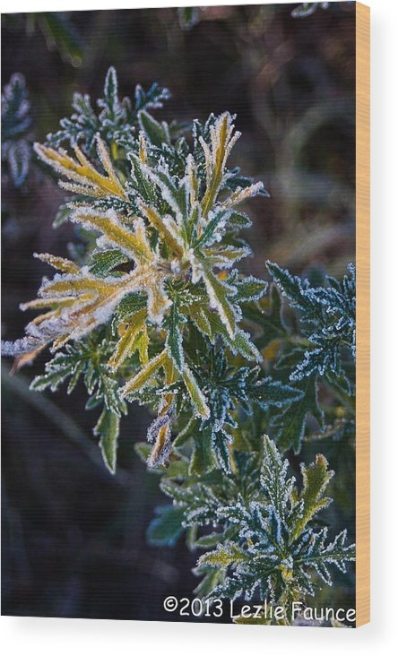 Frost Wood Print featuring the photograph Green And Yellow Frost by Lezlie Faunce
