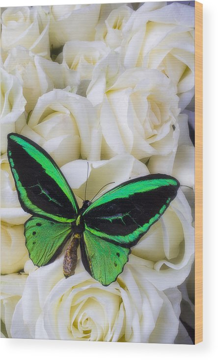 Green Wood Print featuring the photograph Green Butterfly With White Roses by Garry Gay