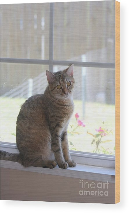 Cat Wood Print featuring the photograph Gretchen Sitting In The Window by Michelle Powell